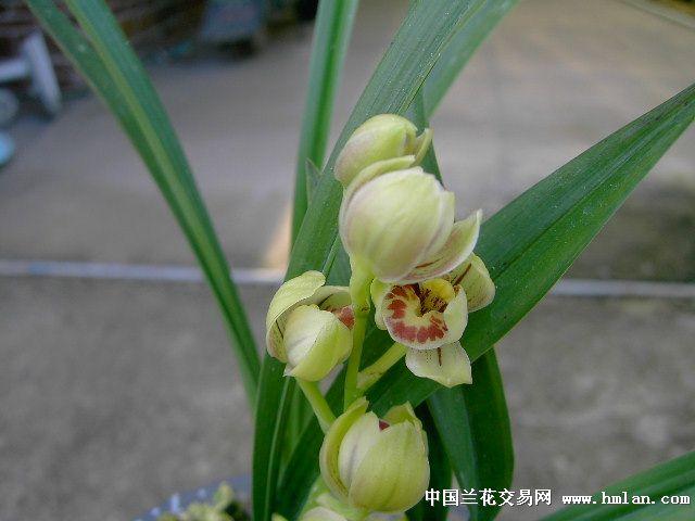 盆栽莲子的步骤图片