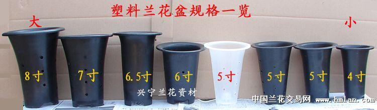 兰花盆塑料