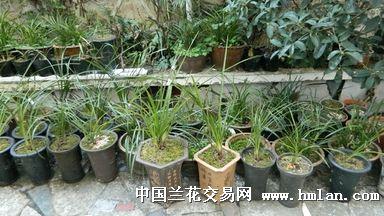 贵州下山草 申请卖家
