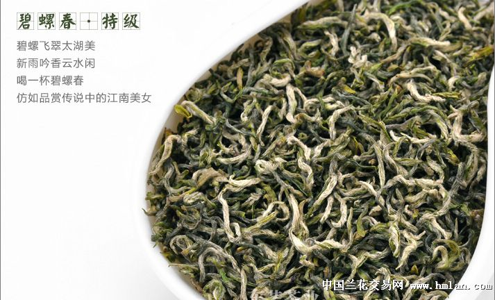 银芽显露,一芽一叶,茶叶总长度为1.5厘米,每500克有5.图片