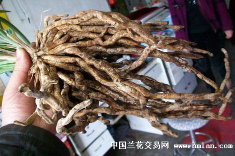 贵州赵勇根