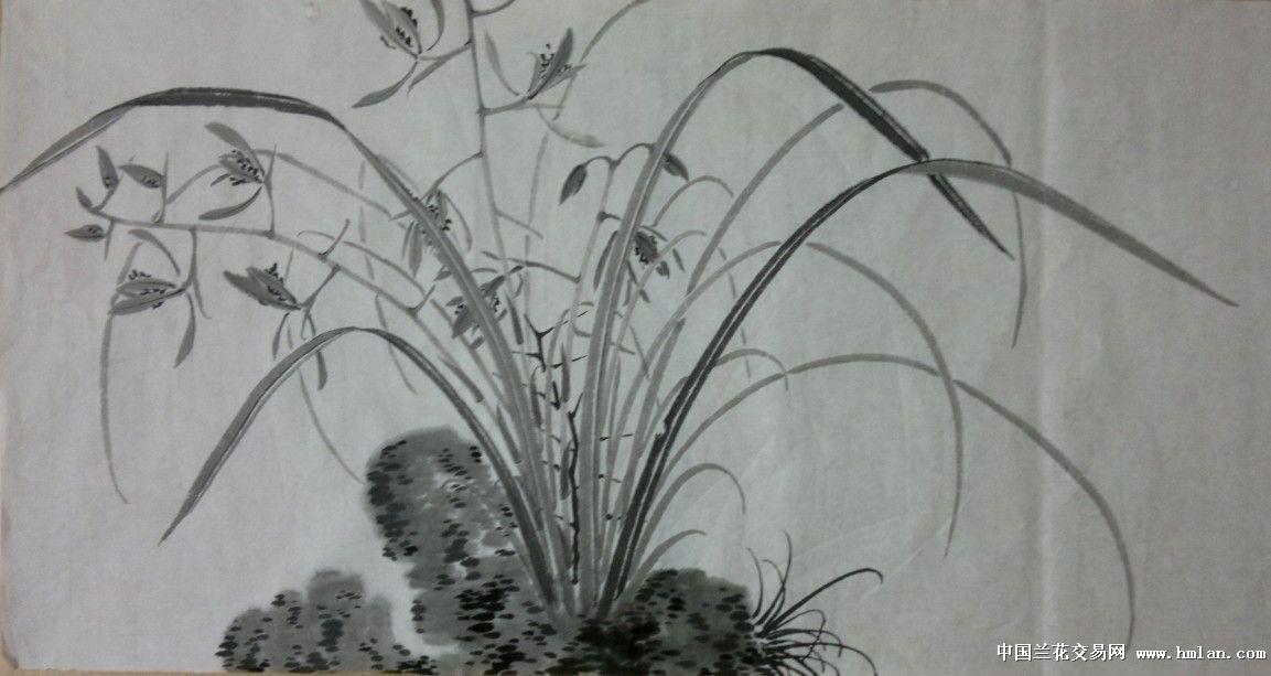铅笔画素描兰花