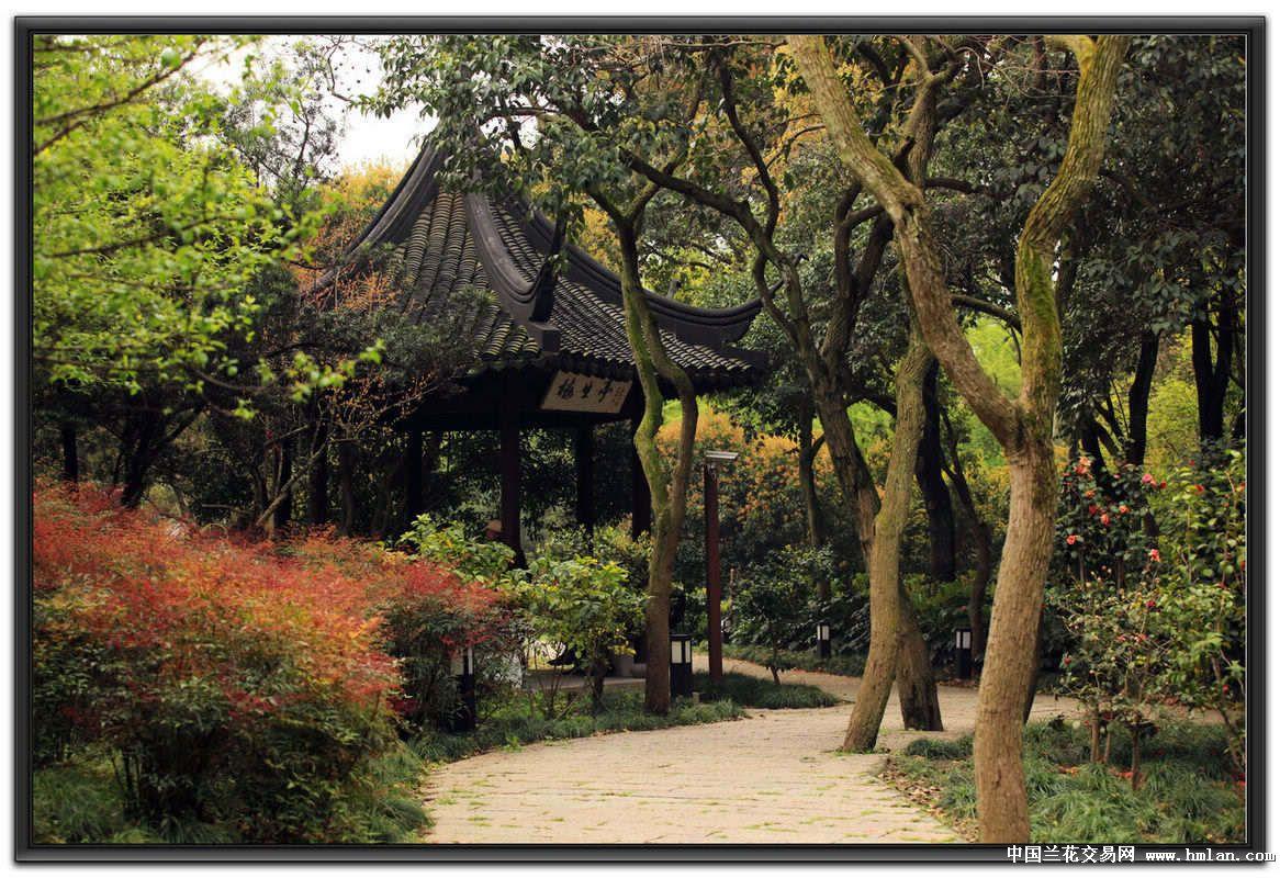 上海松江方塔公园-摄影书画-中国兰花交易网社区