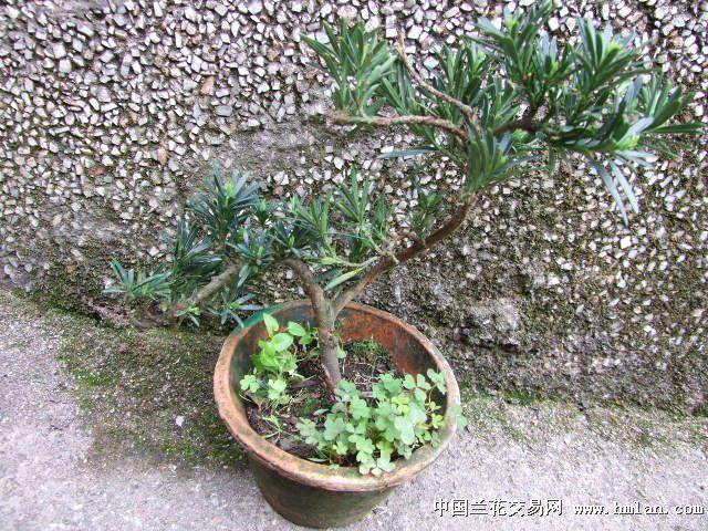 动物 盆景 盆栽 蛇 植物