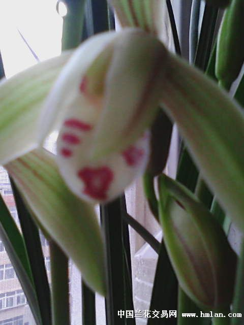 最便宜的花_史上最便宜的花 让你猜 13pp