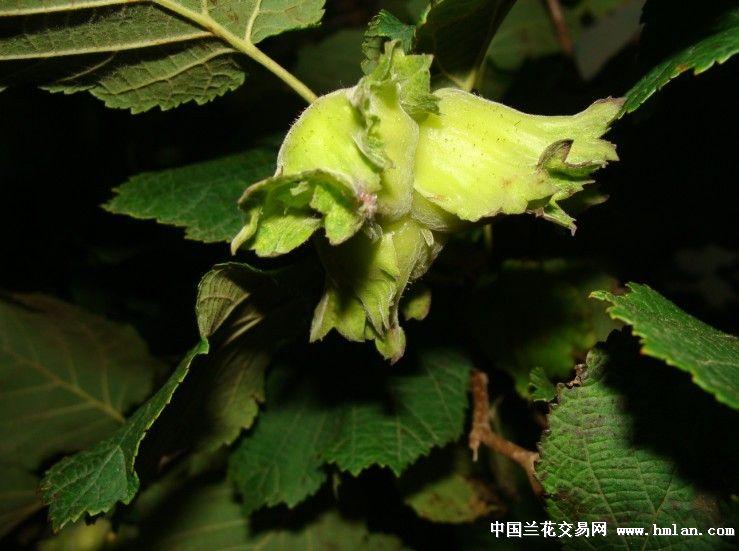 中国·伊春森林食品节!