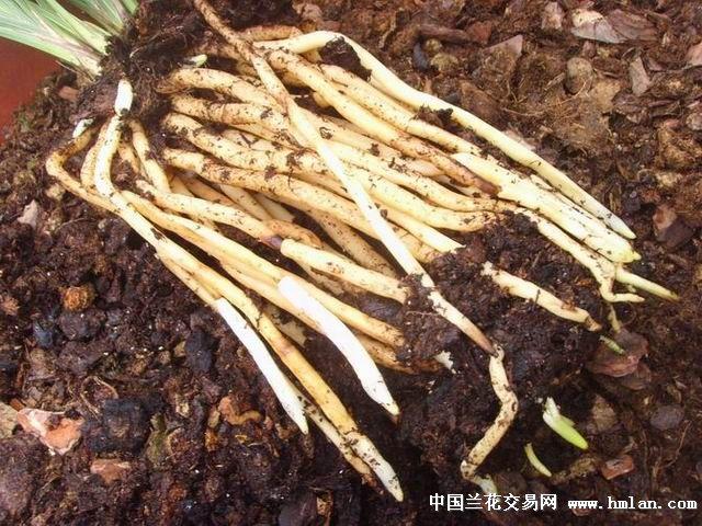 兰花营养土专用土散装