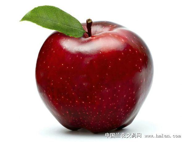 一堆苹果卡通图片