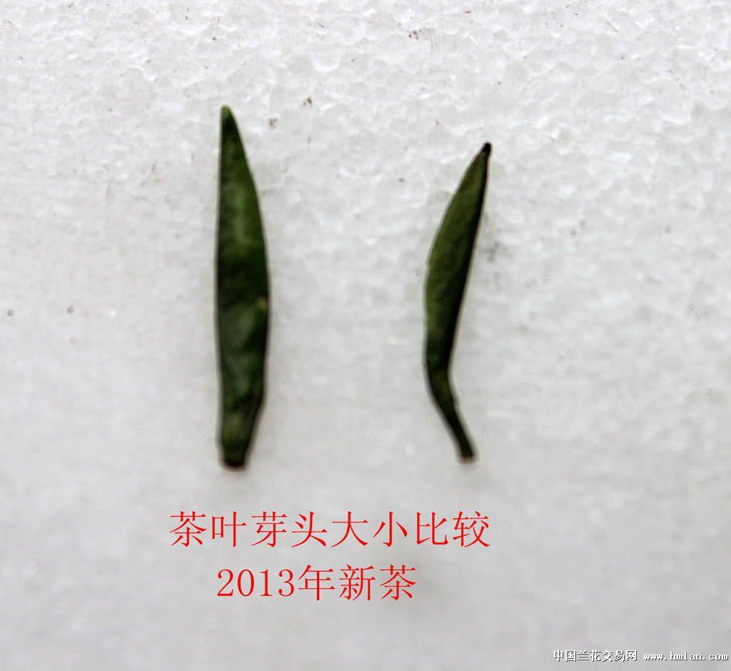 2013年新茶,竹叶青茶