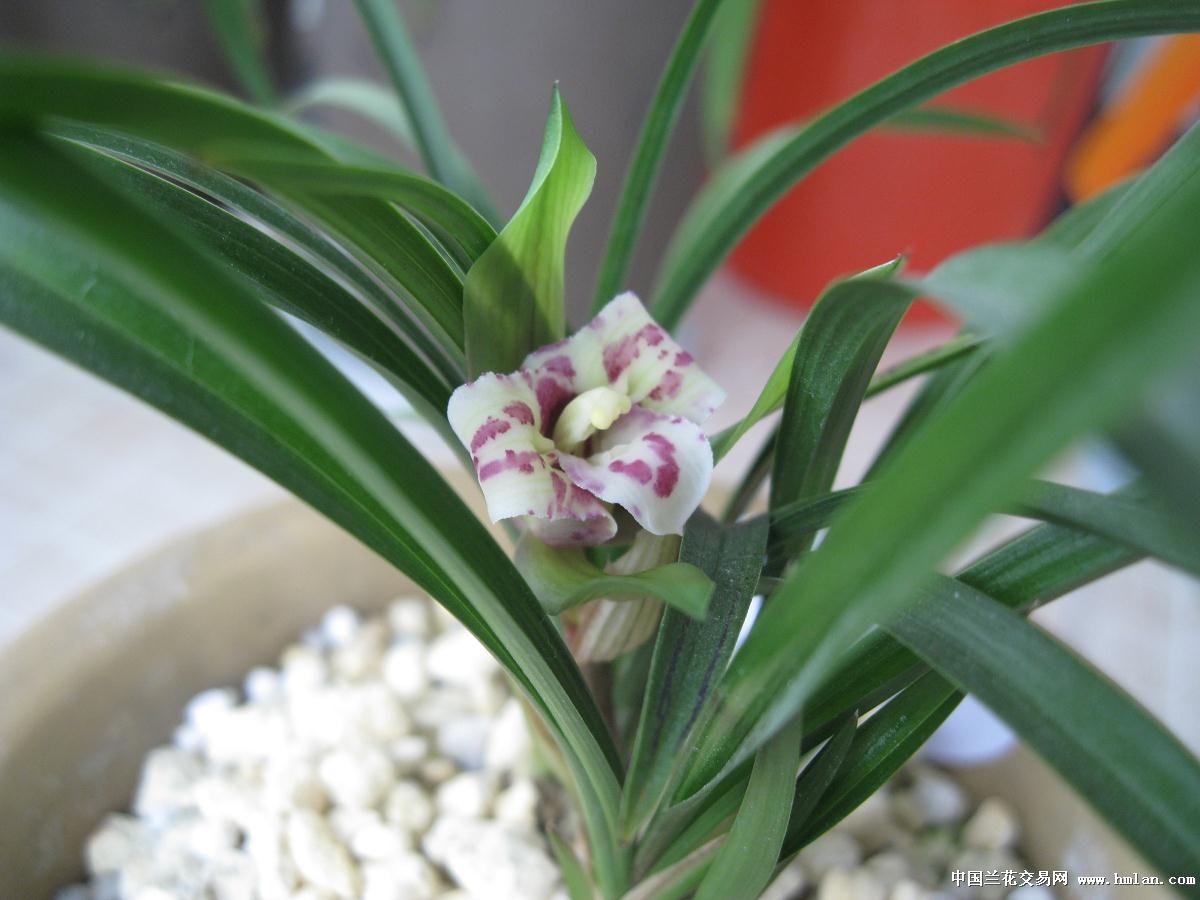 壁纸 花 盆景 盆栽 植物 桌面 1200_900