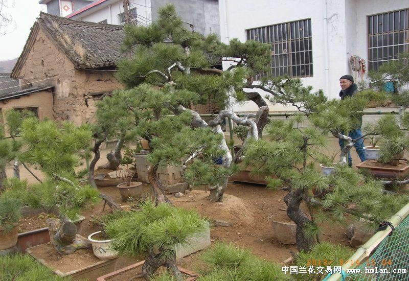 兰花假山矢量图