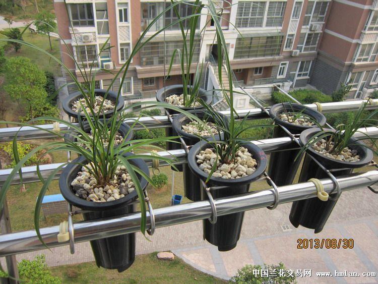 阳台养兰实用小道具-种养心得-中国兰花交易网社区