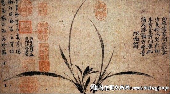 历代名家画兰全集(转)图片