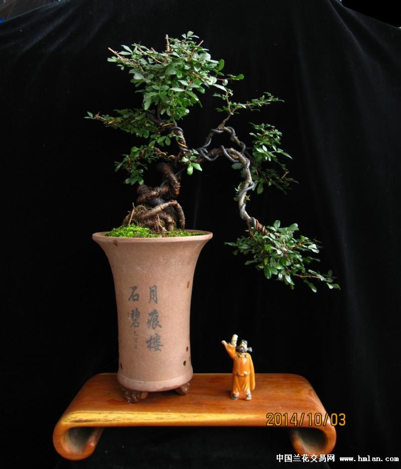 室内植物下小品