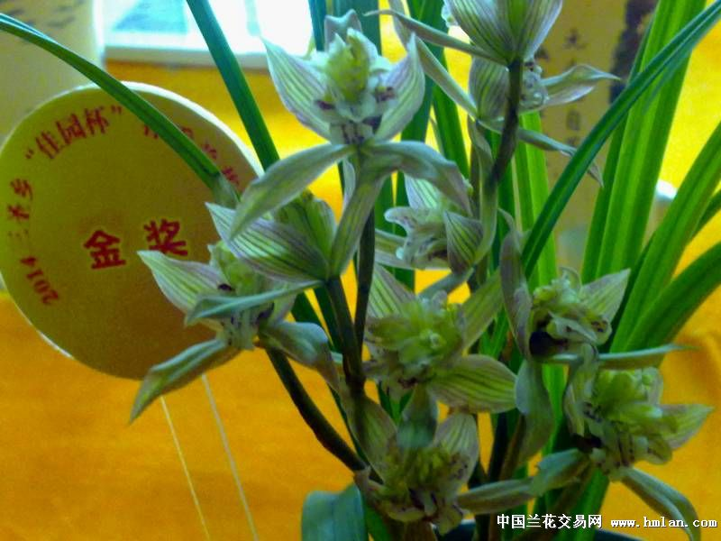2014佳园杯兰展在成都三圣乡举行-兰花新闻-中围棋第一步右上角图片