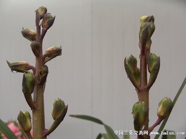 梅花朵折纸步骤