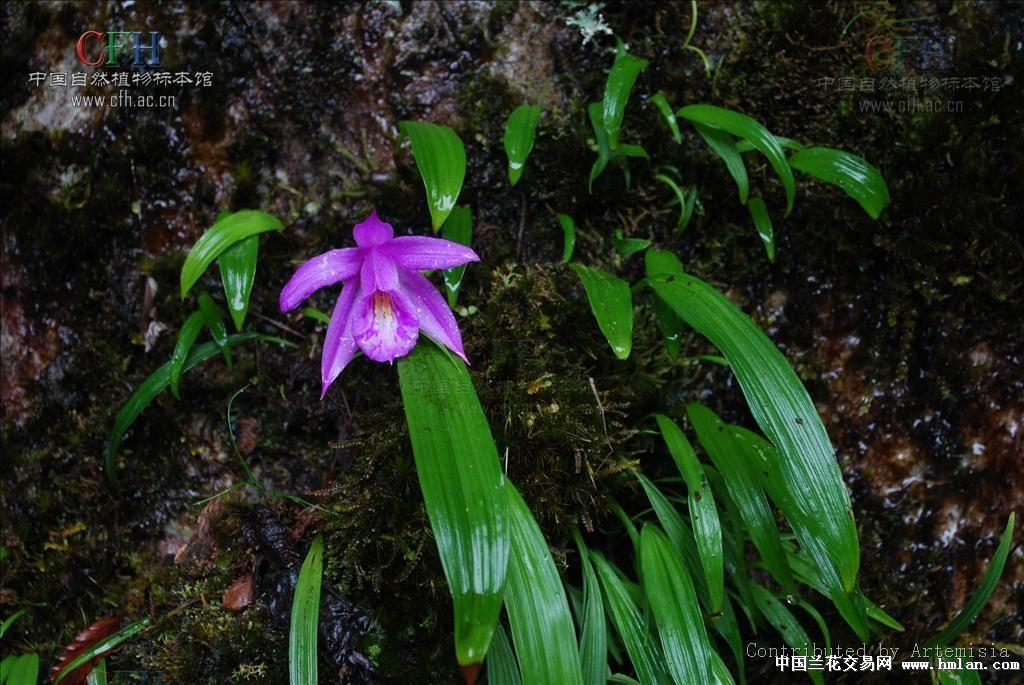 部分兰科植物图片和名称