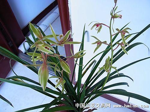 旋转叶花的编织图解