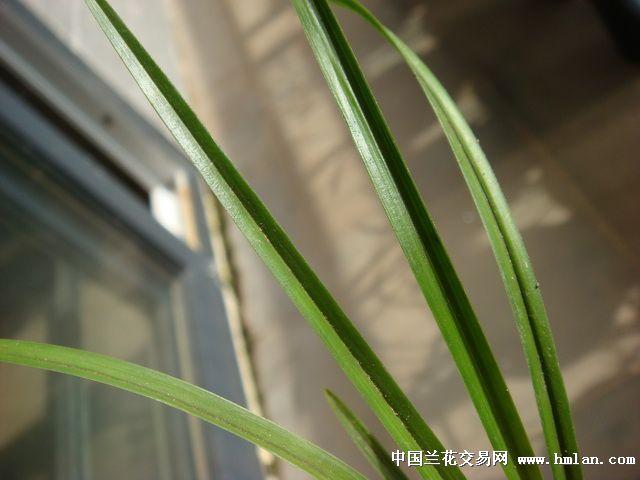 植物根茎芽结构图