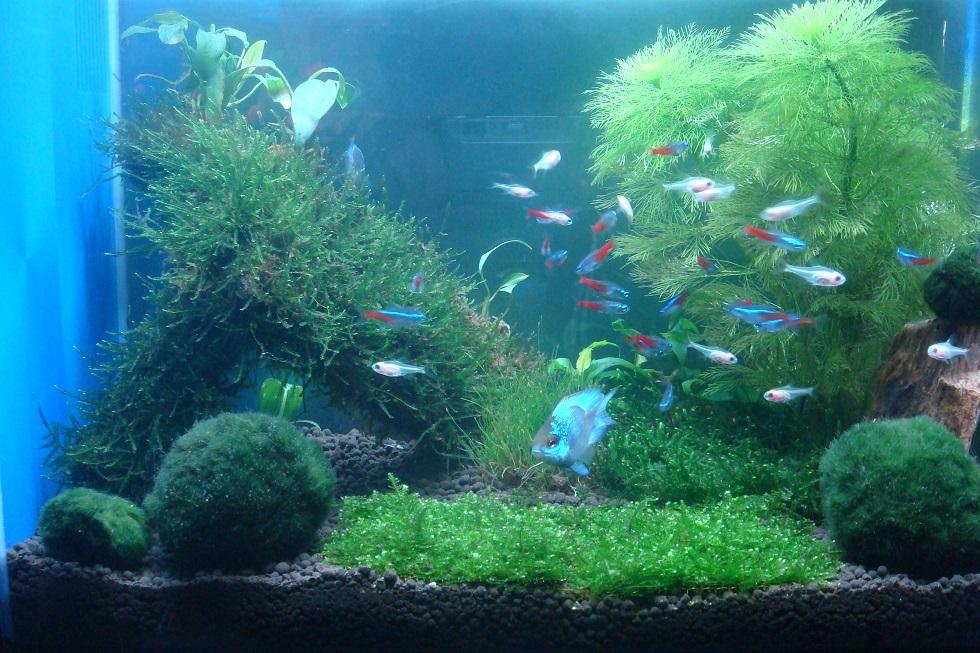 壁纸 海底 海底世界 海洋馆 水草 水生植物 水族馆 980_653