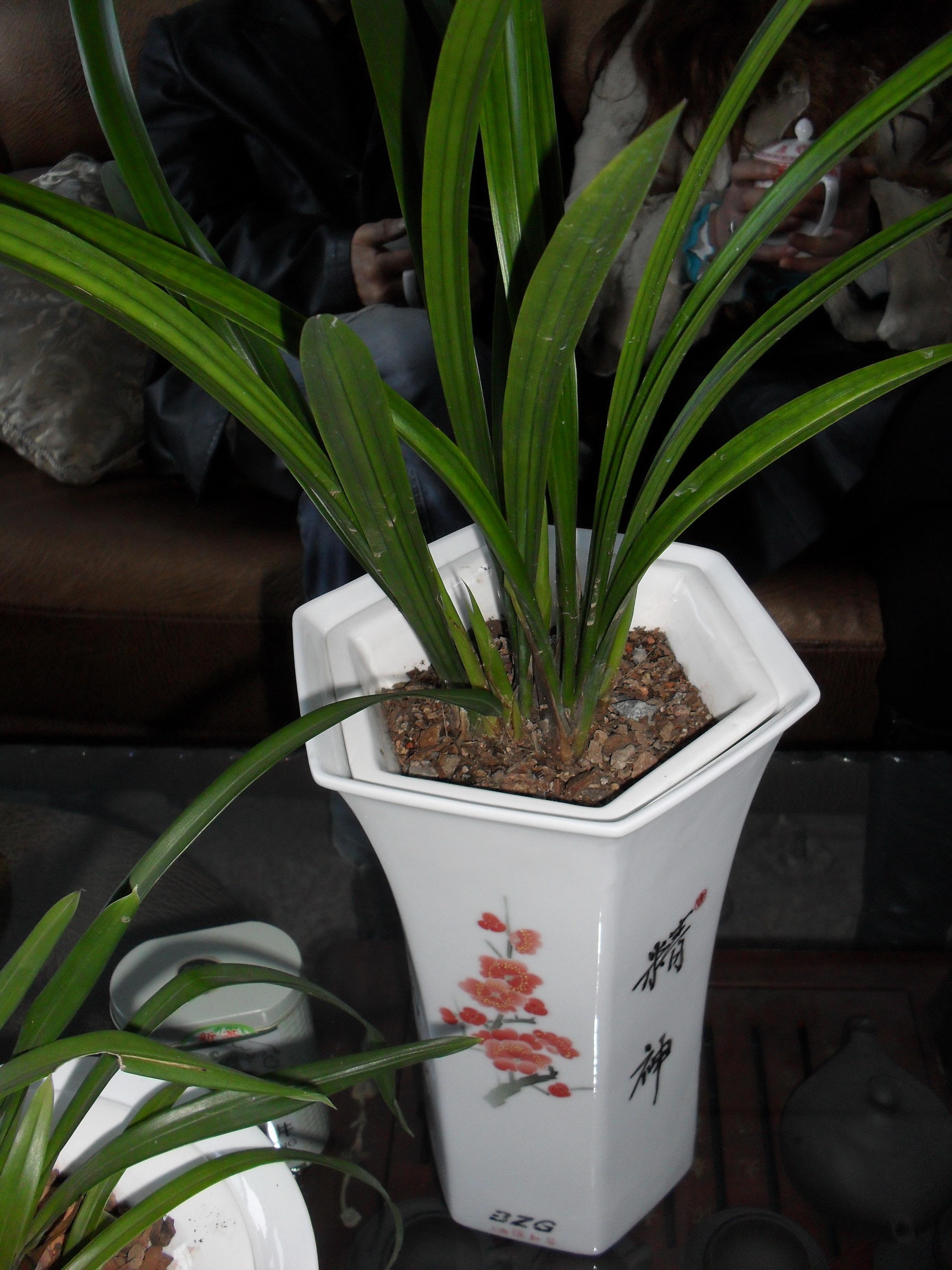 家庭养兰主要是观赏性的,用盆最好使用紫砂盆或塑盆.兰花专用紫砂盆,.