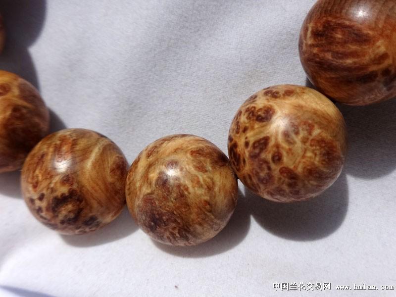 花纹漂亮的琥珀木樱瘤疤手串
