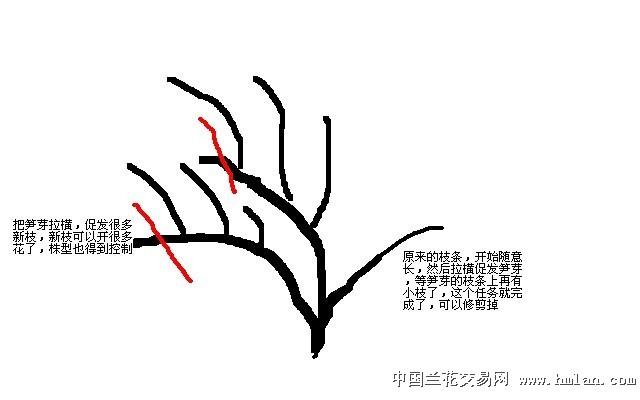 玫瑰植物画法步骤