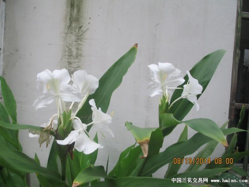 有香味的花有哪些_